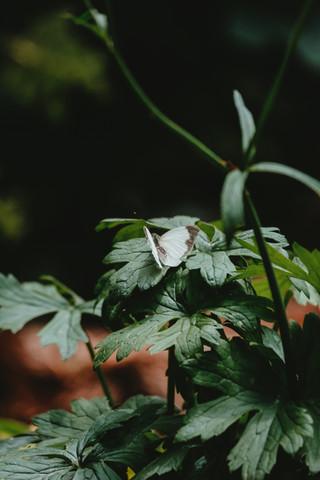 monte verde, mg   march 2019