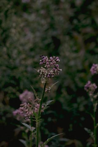 monte verde, mg   may, 2021