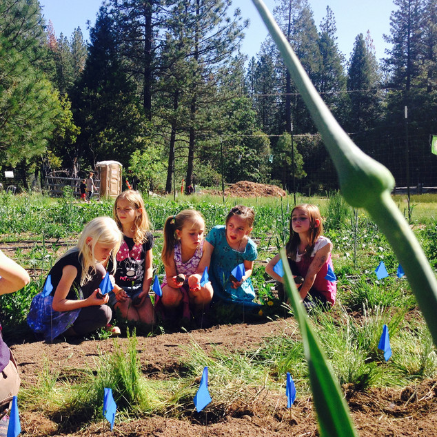 Sierra Harvest teaches school kids about growing their own food.
