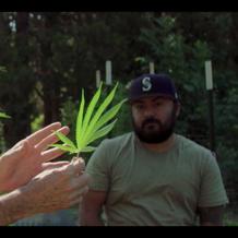 Medical Cannabis Farmers