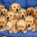 Yurt dışından kaçak sokulan 13 yavru köpek yakalandı