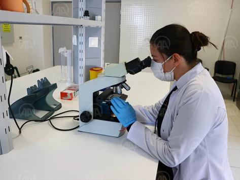 NKÜ'de kanser tedavisinde kullanılan aşı çalışmalarında sona yaklaşıldı