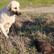 Edirne'de 8 yavru köpek yakılarak öldürüldü