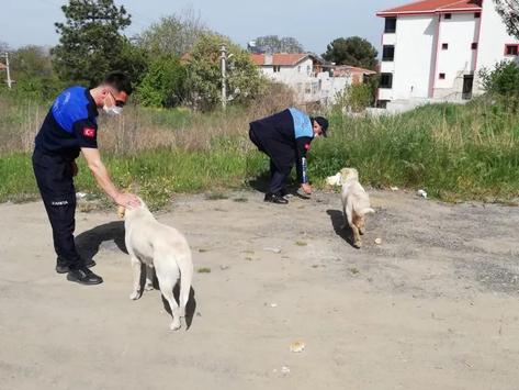 Tam kapanmada sokak hayvanları onlara emanet