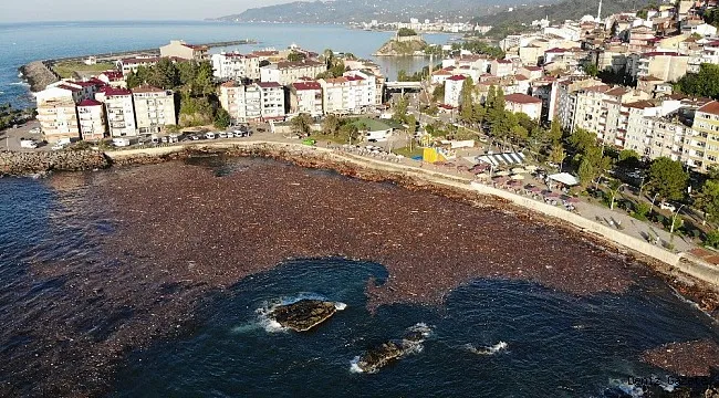 selin sürüklediği ağaçlar ve deniz