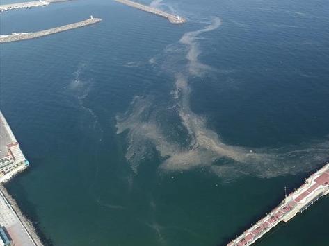 Balıkçıların korkulu rüyası!   Tekirdağ sahili kapladı