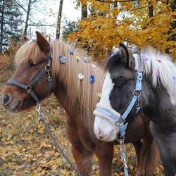 Best friends match🦄💟🦄🍂 Love these cute little ponies! _livochee