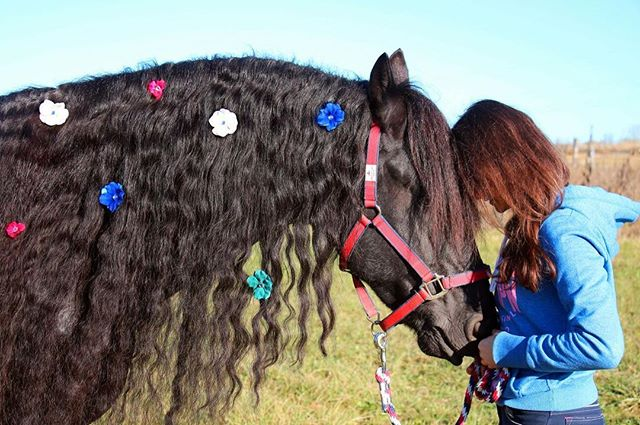 A bond built in silence💜 _horsesoulmates has a gorgeous mane full of silk diamond hydrangeas! 🌻🌸�