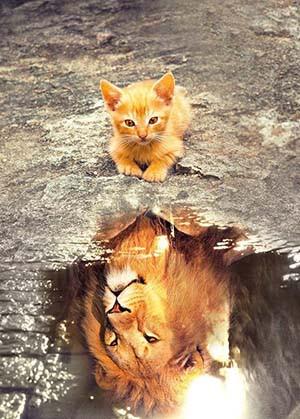 Confiance en soi - chat