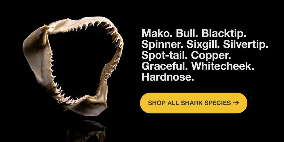 Skulls-Shark-Week-Shop-Now-R1.jpg