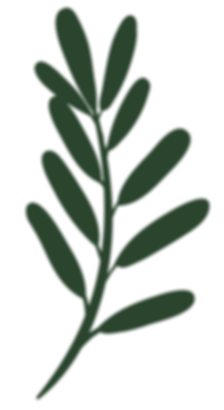 plants-01.png