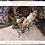 Thumbnail: Selenite (16 Dec - 22 Dec)