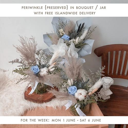 Periwinkle (1 Jun - 6 Jun)