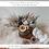 Thumbnail: Stella Luna: Dried (25 May - 30 May)