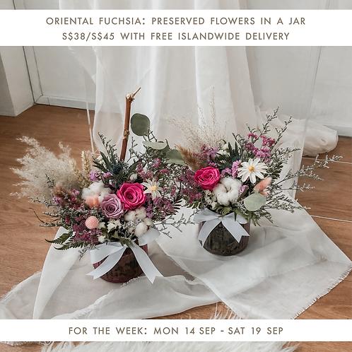 Oriental Fuchsia (14 Sep - 19 Sep)
