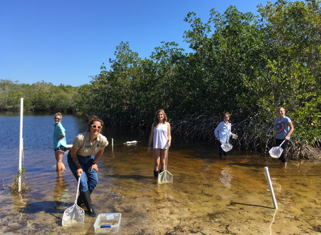 Junior Environmental Enthusiasts