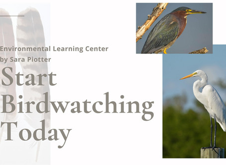Lunch and Learn - Birdwatching