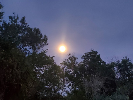 Full Moon Forest Therapy for the Treasure Coast