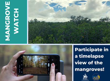 Citizen Science Time-lapse of Florida Mangroves