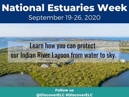 National Estuaries Week 2020