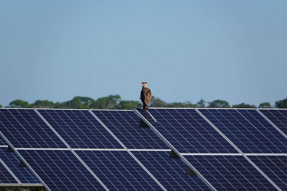 bird perched on solar panel