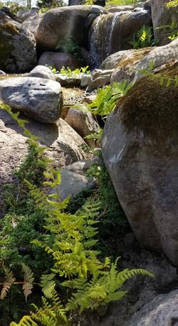 Waterfall fern
