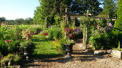 The beautiful Clematis Arbor at Meadow View Gardens, Roseneath, Ontario