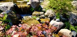 Waterfall Maple
