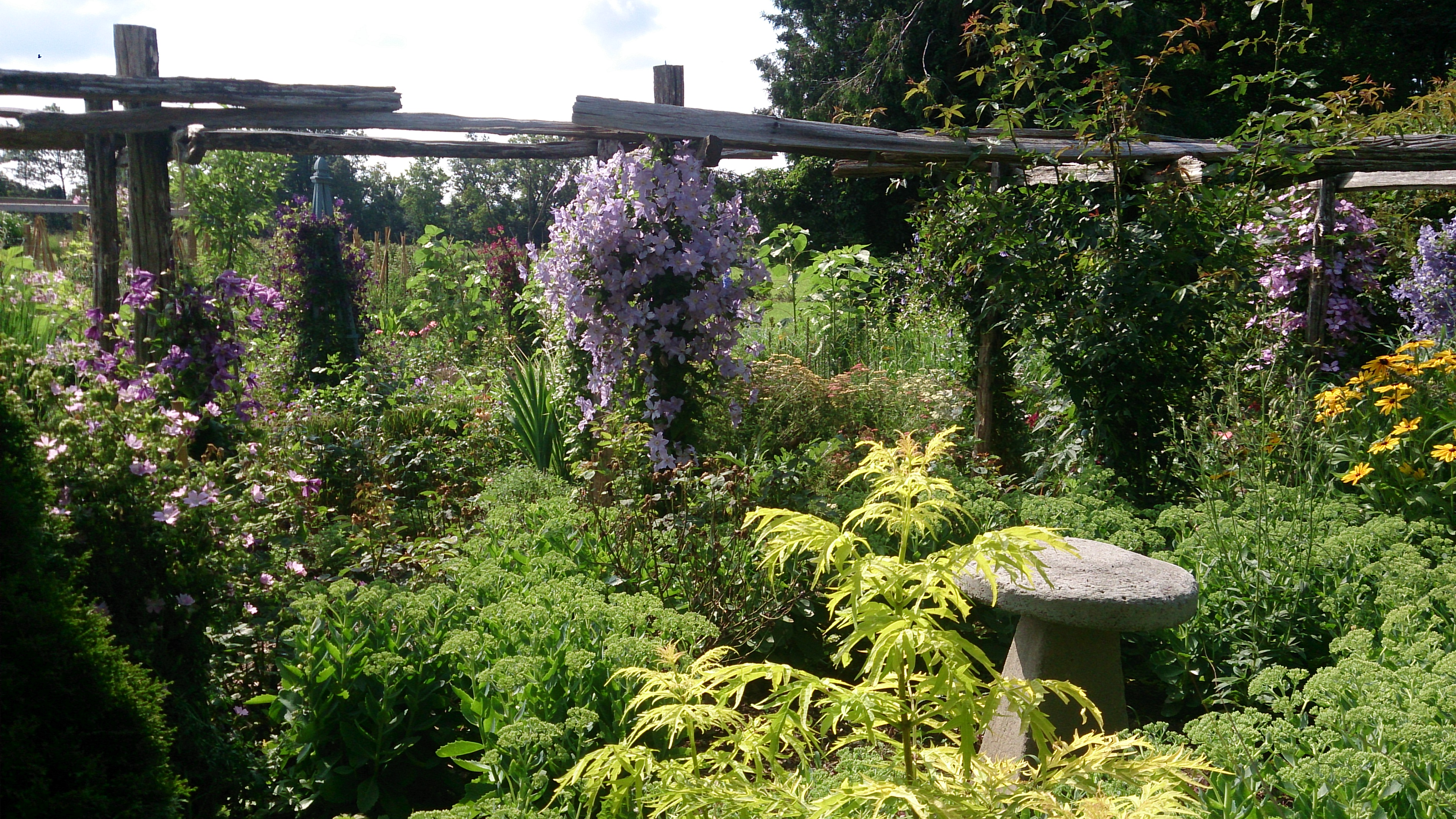 A view of the Clematis Arbor