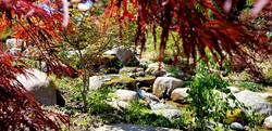 Waterfall under Maple