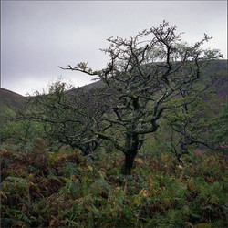 2013, Aber, Snowdone, Wales, GB