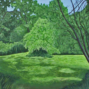 Sun-Kissed Meadow