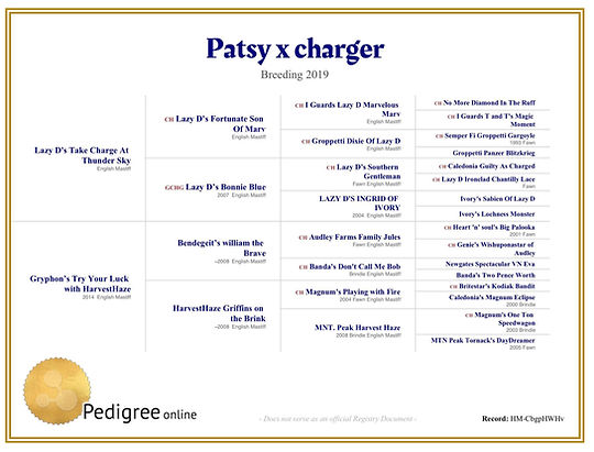 Patsy_Charger_litterpedigree.jpg