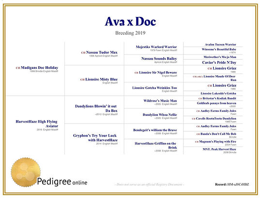 Ava & Doc Litter Pedigree