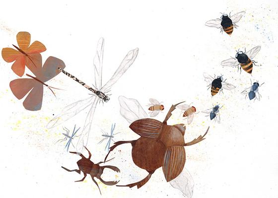 O insight dos insetos