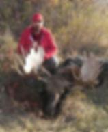 saskatchewan moose