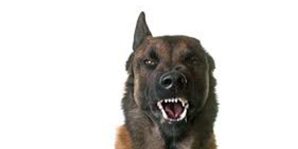 AGGRESSION & BEHAVIOR ASSESSMENT FOR ADOPTION/ANIMAL CARE & HANDLING