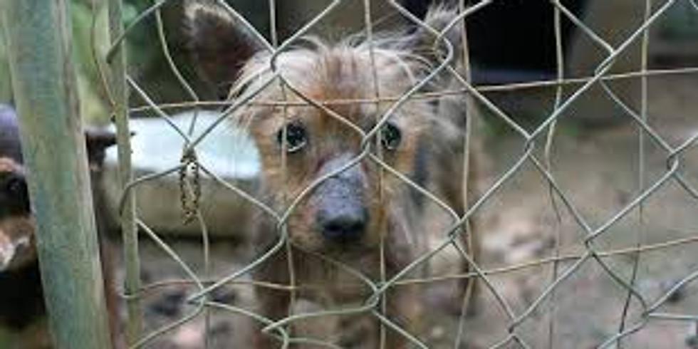 Animal Cruelty Investigations Class