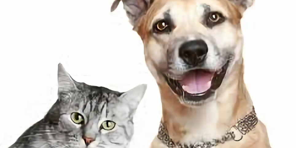 HUMANE ANIMAL EUTHANSIA TRAINING AND RE-CERTIFICATION