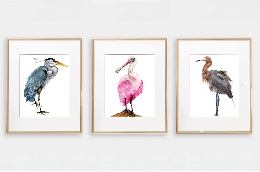 Florida Bird Art Prints