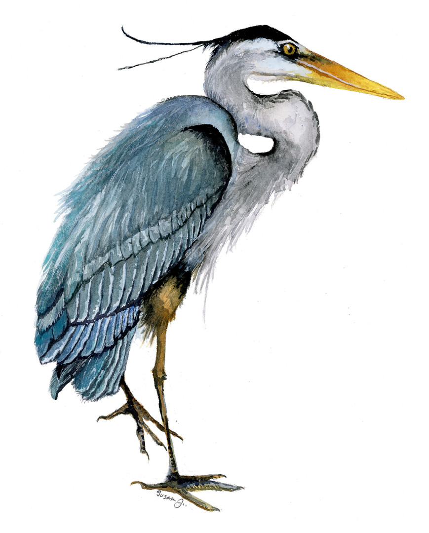 Blue Heron Watercolor Painting