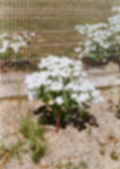 film-0033_32r.jpg