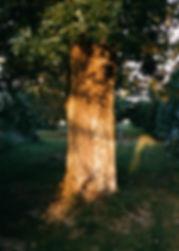 film-0001_0c.jpg