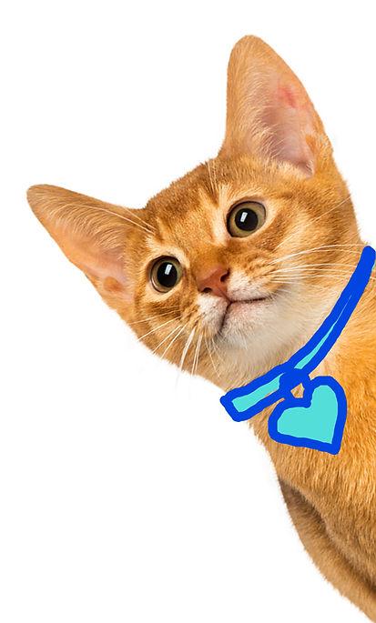 side-cat.jpg