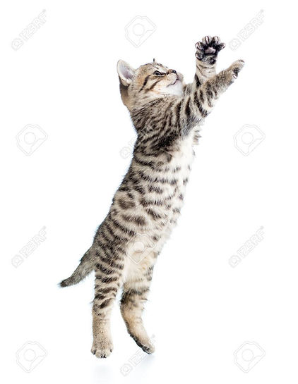 34023712-jumping-cat-kitten-isolated-on-