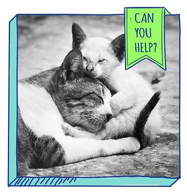can-you-help.jpg