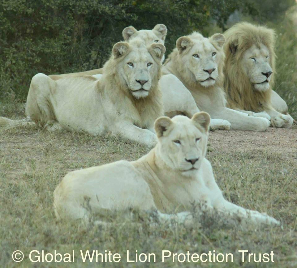 Journey into White Lion Leadership - South Africa October 2019
