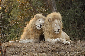 The borthers! Tsa Reserve of the GWLPT