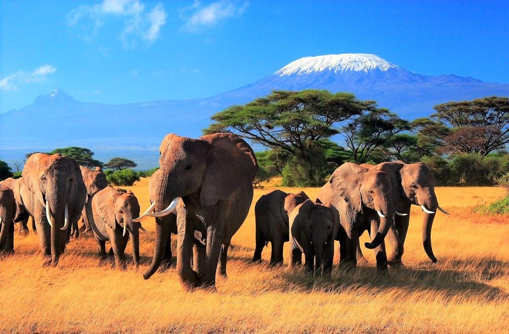 Awakening to the Ancient Elephant Song Adventure to Kenya September 2018
