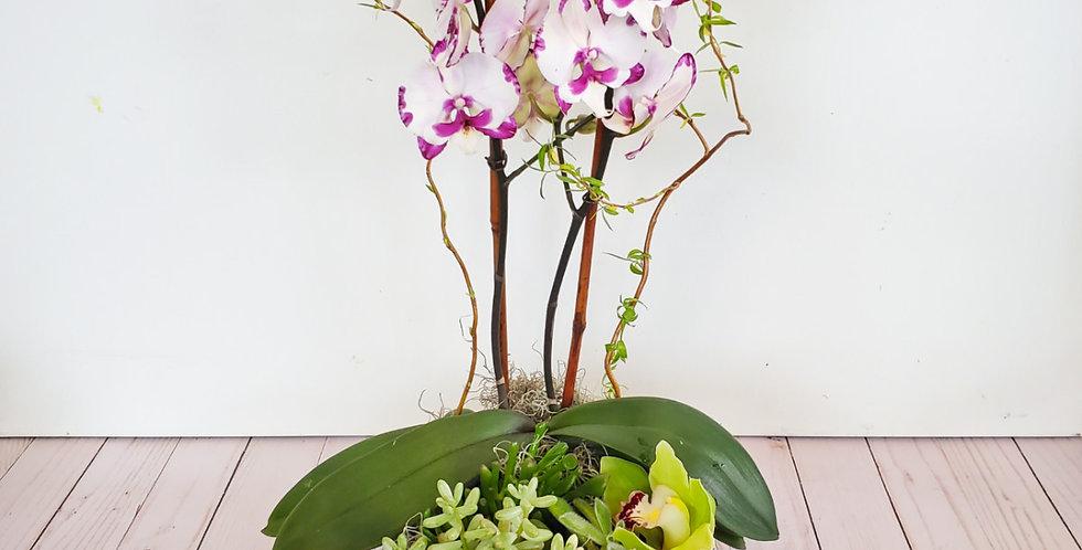 Orchid Garden Dish
